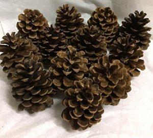 Unscented Pine Cones